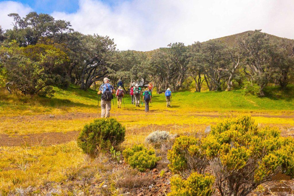 randonnée réunion trek agence GRR2 diagonale traversée bois d'ozou fournaise randonneurs