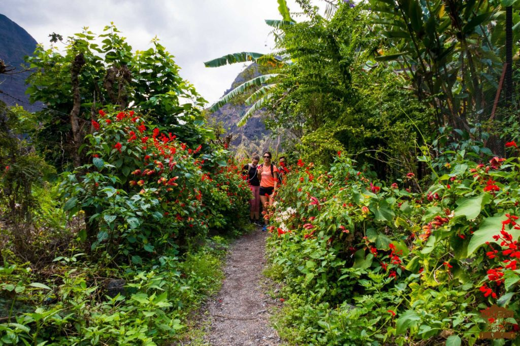Sentier fleuri à Cayenne mafate réunion trek randonneur
