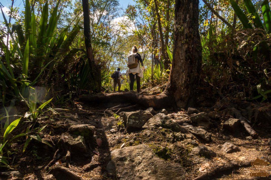 Sentier en forêt dans Cilaos randonnée trek réunion 974