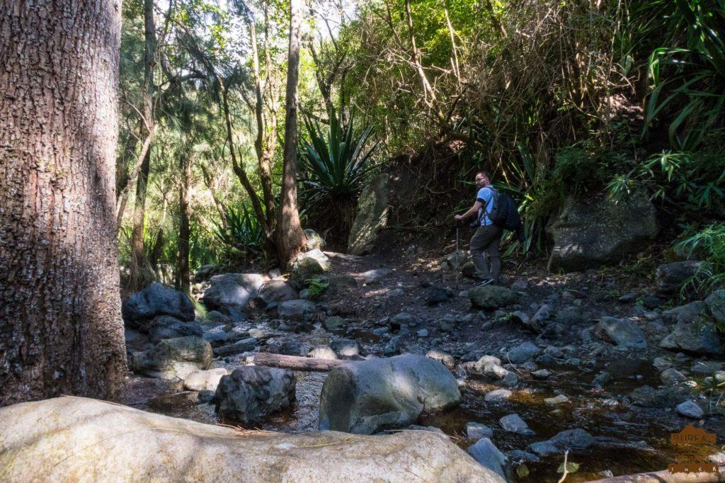 sentier forêt cilaos riviere randonneur trek 974