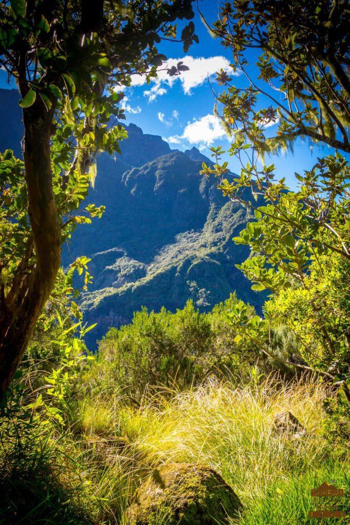 Forêt dans le cirque de Cilaos réunio trek randonnée guide