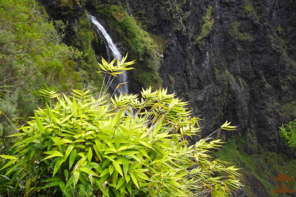 bambou cascade dans salazie montagne réunion trek