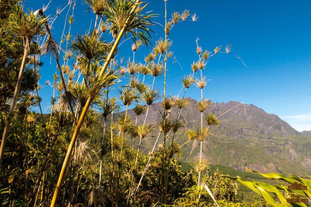 Bambou Calumets, Piton des Neiges et arête du Gros morne trek réunion