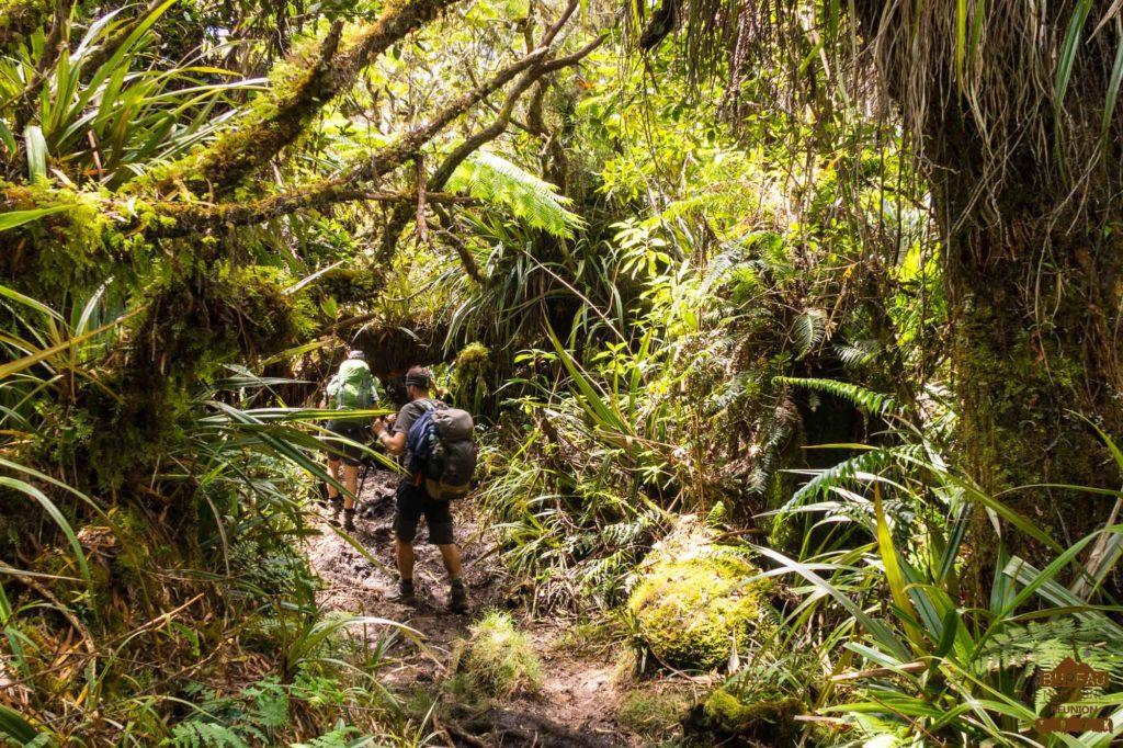 La foret tropicale d'altitude de Bébour Bélouve randonneur trek réunion
