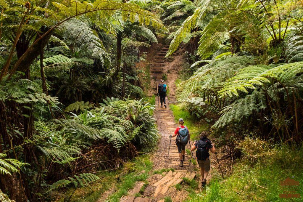 La foret tropicale d'altitude de Bébour Bélouve, fougères arborescentes fanjan randonneur réunion