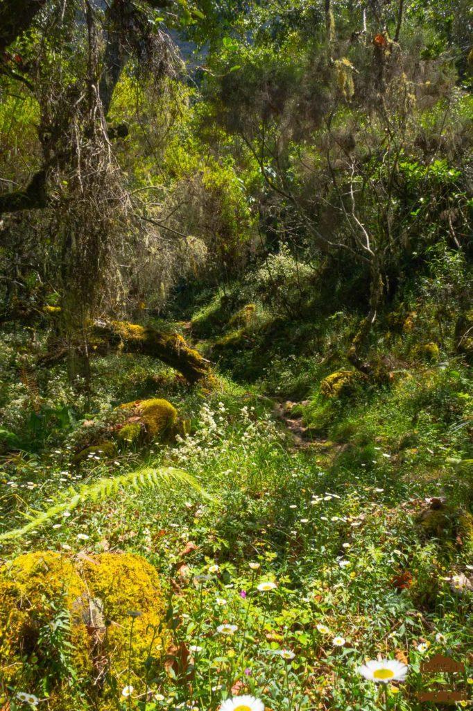 Forêt sous le Taïbit Cilaos fleurs reunion trek