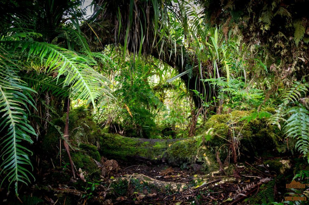 En forêt de Bébour trek réunion 974 guide