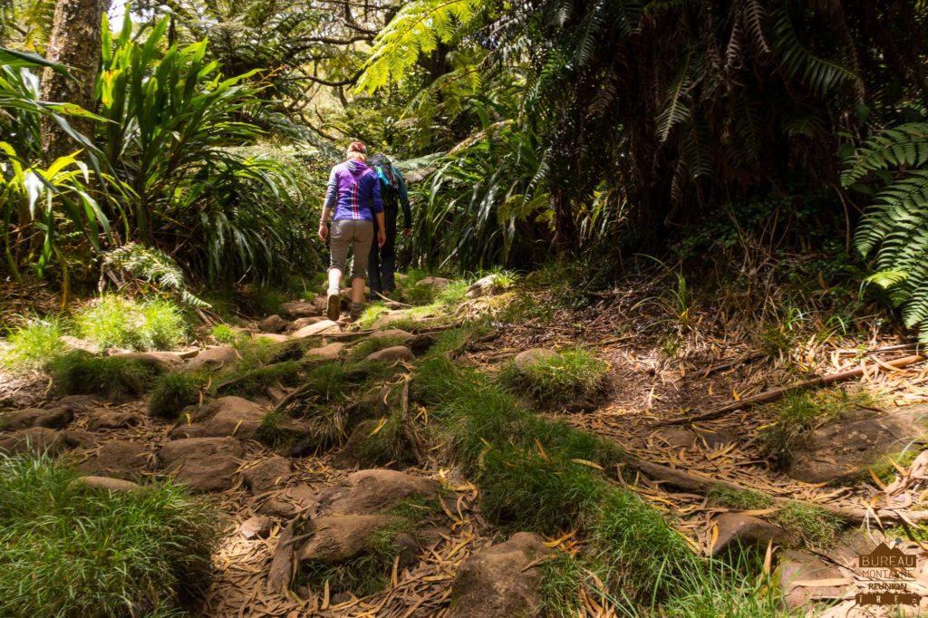 randonneur En forêt de Bébour ttrek réunion guide agence 974